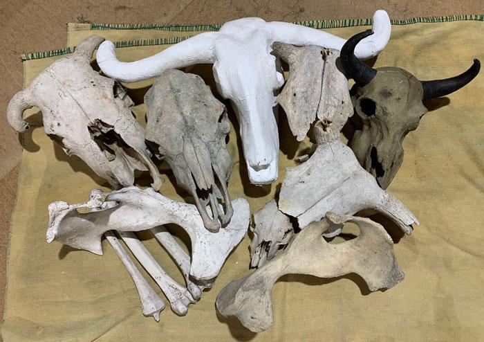 Animal Bones - Prop For Hire