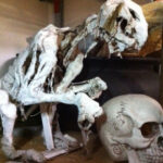 Animal Carcass - Prop For Hire