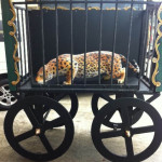 Animal Cart - Prop For Hire