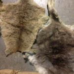 Animal Skins - Prop For Hire