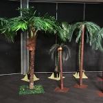 Assorted Palm Trees - Prop For Hire