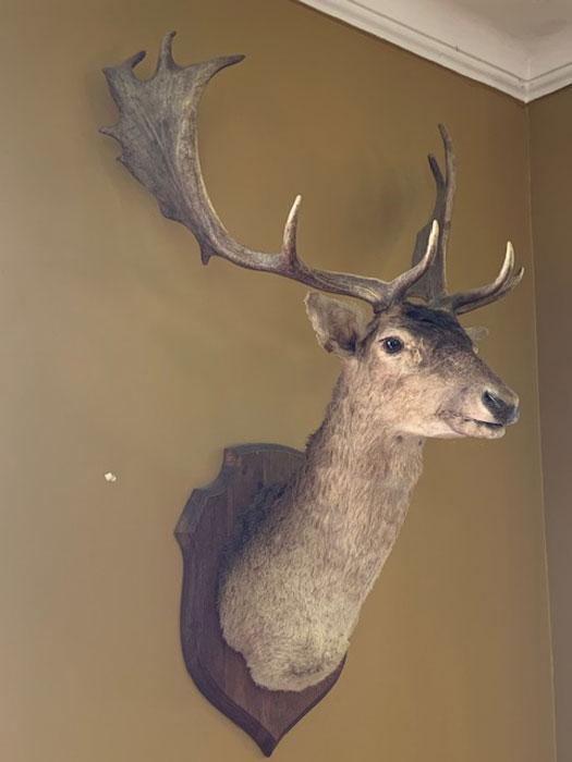 Authentic Deerhead - Prop For Hire