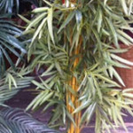 Bamboo Palm 1 - Prop For Hire
