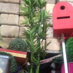 Bamboo Palm 2 - Prop For Hire