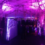 Bare Trees Archway 1 - Prop For Hire