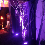 Bare White Branches 2 - Prop For Hire