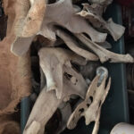 Bleached Animal Bones - Prop For Hire