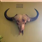 Buffalo Skull - Prop For Hire