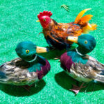 Chooks with Ducks - Prop For Hire