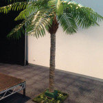 Date Palms - Prop For Hire