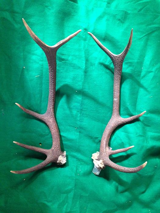 Deerhorns - Prop For Hire