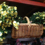 Flower Basket - Prop For Hire