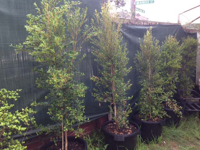 Garden Trees - Prop For Hire