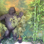 Gorilla - Prop For Hire