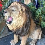 Growling Lion - Prop For Hire