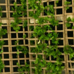 Lattice Screen Fence - Prop For Hire