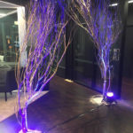 Lit Trees - Prop For Hire