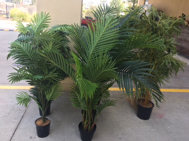 Low Palms - Prop For Hire