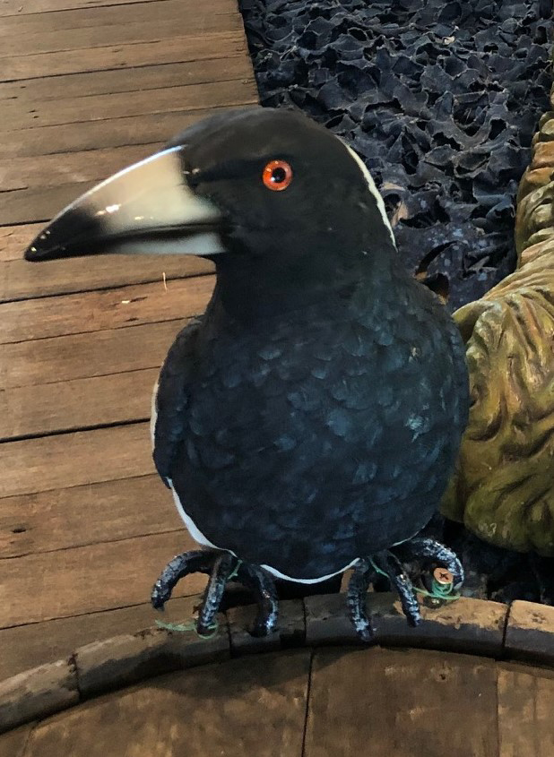 Magpie - Prop For Hire