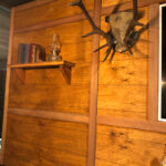 Mounted Antlers - Prop For Hire