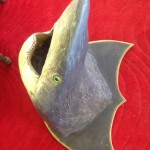 Mounted Shark - Prop For Hire