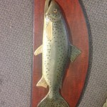 Mounted Trout 1 - Prop For Hire