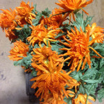 Orange Shaggy Daisies - Prop For Hire