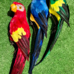 Parrots - Prop For Hire