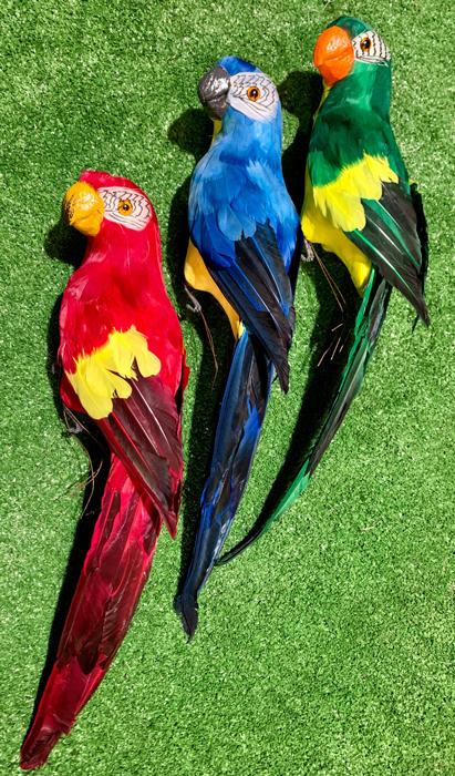 Parrots - Prop For Hire