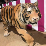 Prowling Tiger - Prop For Hire