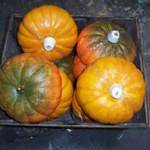 Pumpkins 1 - Prop For Hire