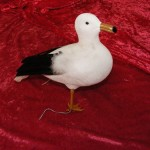 Seagulls - Prop For Hire