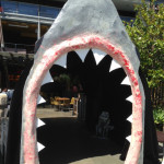 Shark Entrance - Prop For Hire