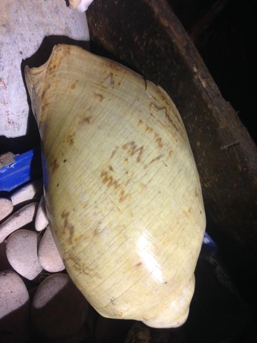 Shells 2 - Prop For Hire
