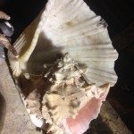 Shells 3 - Prop For Hire