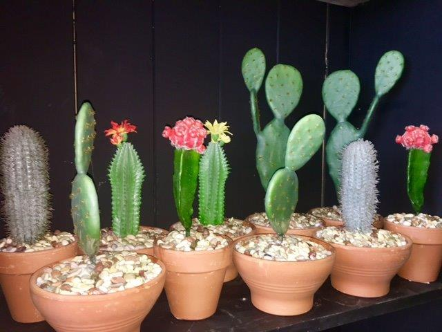 Small Artificial Cactus - Prop For Hire