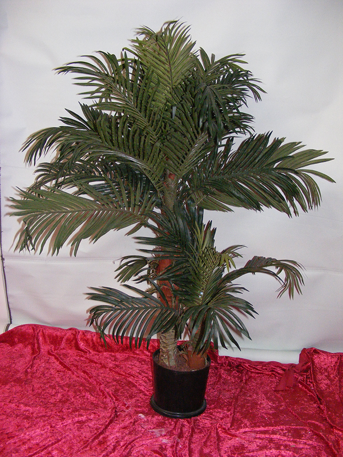 Small Date Palm - Prop For Hire