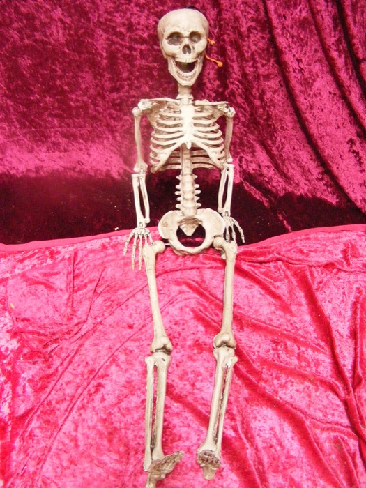 Small Skeleton - Prop For Hire