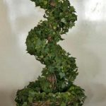 Spiral Ivy Topiary - Prop For Hire