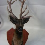 Stags Head - Prop For Hire