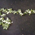 Strand Of Flowers - Prop For Hire