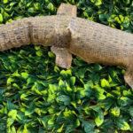 Taxidermy Crocodile - Prop For Hire