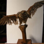 Taxidermy Falcon - Prop For Hire