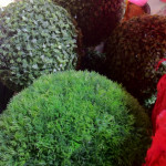 Topiary Trees - Prop For Hire