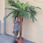 Tropical Palm 2 - Prop For Hire
