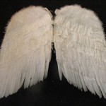 Wings - Prop For Hire